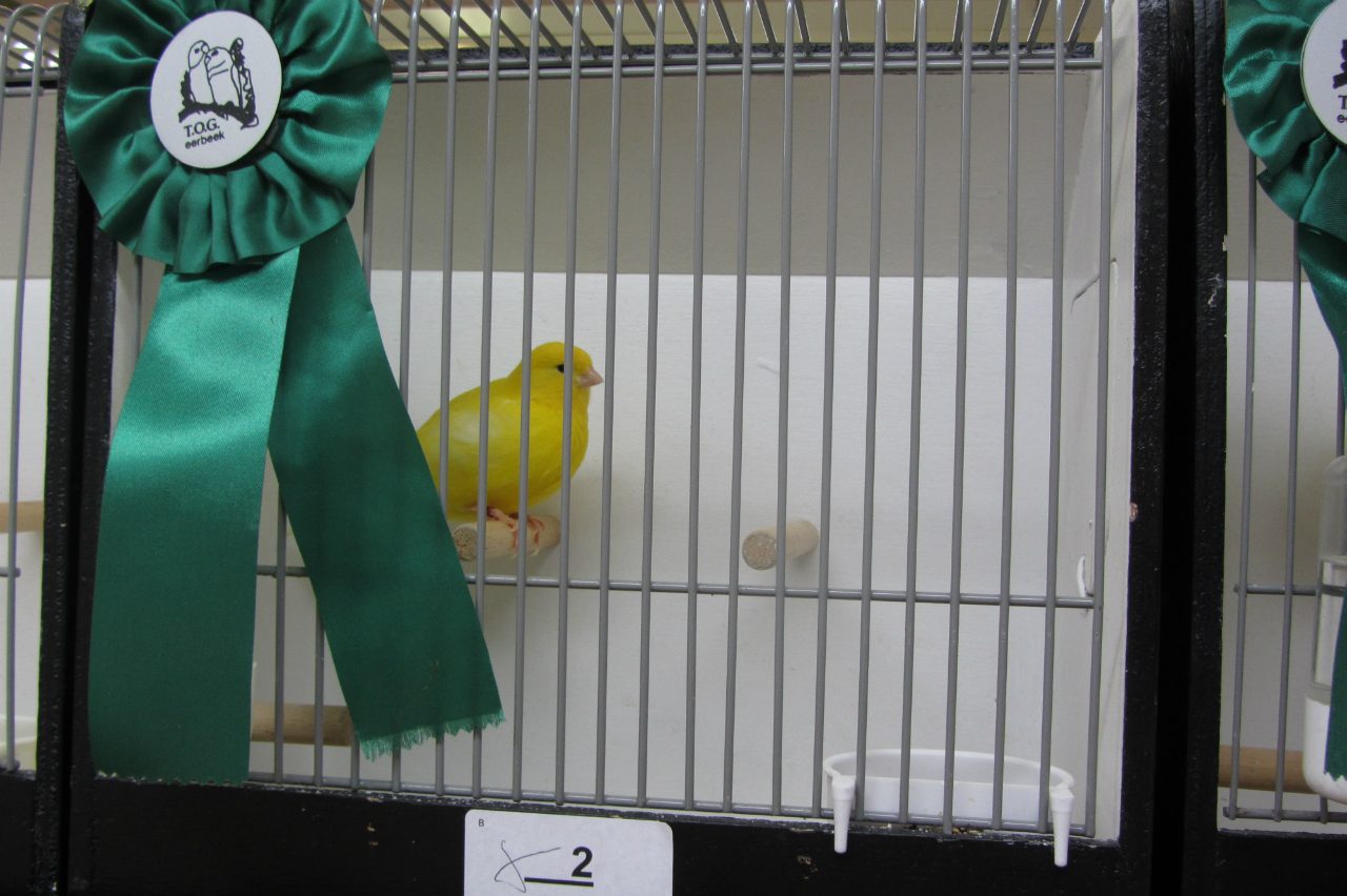 kampioen stellen geel intensief
