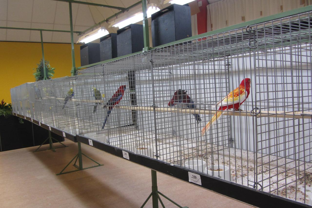 fotos-vogelshow-2012-032
