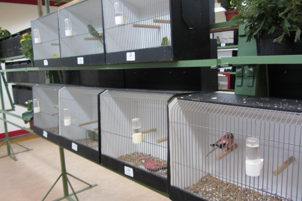 fotos-vogelshow-2012-034