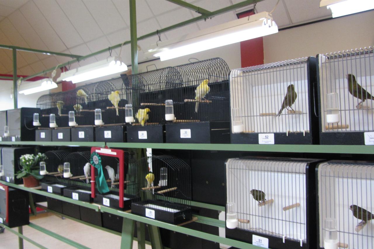 fotos-vogelshow-2012-035
