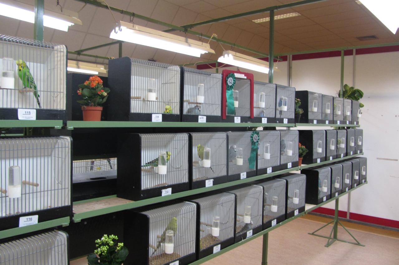 fotos-vogelshow-2012-036