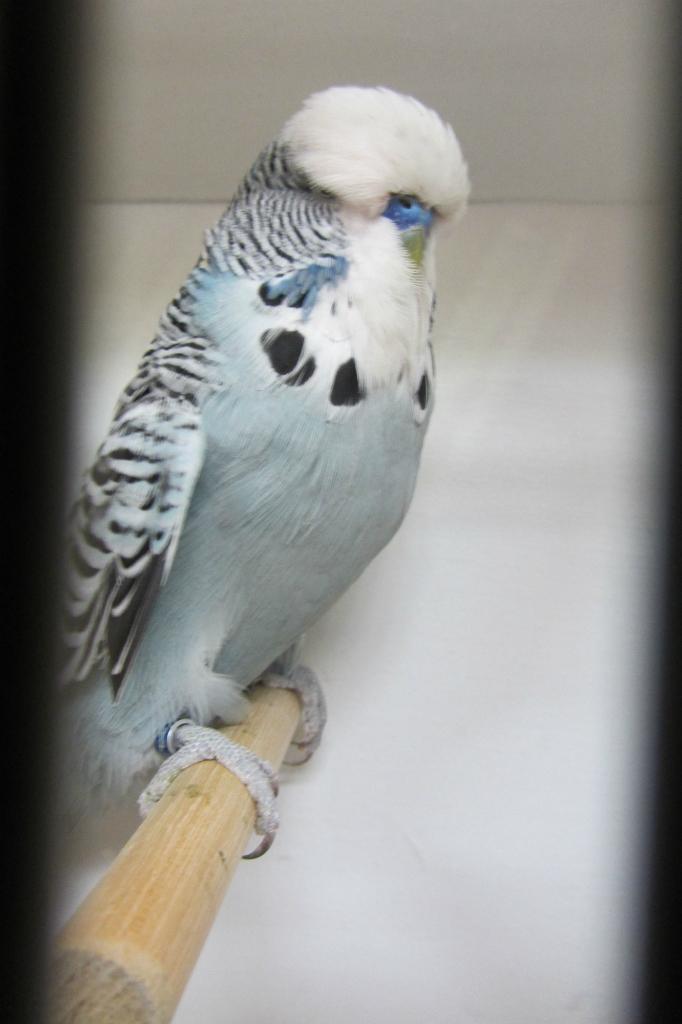 fotos-vogelshow-2012-071