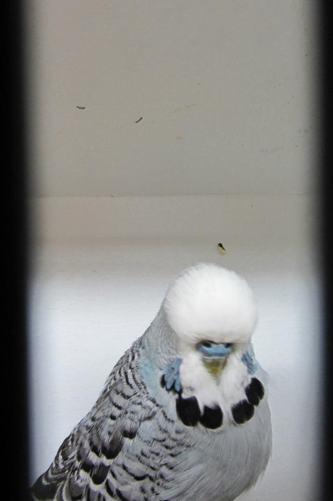 fotos-vogelshow-2012-075