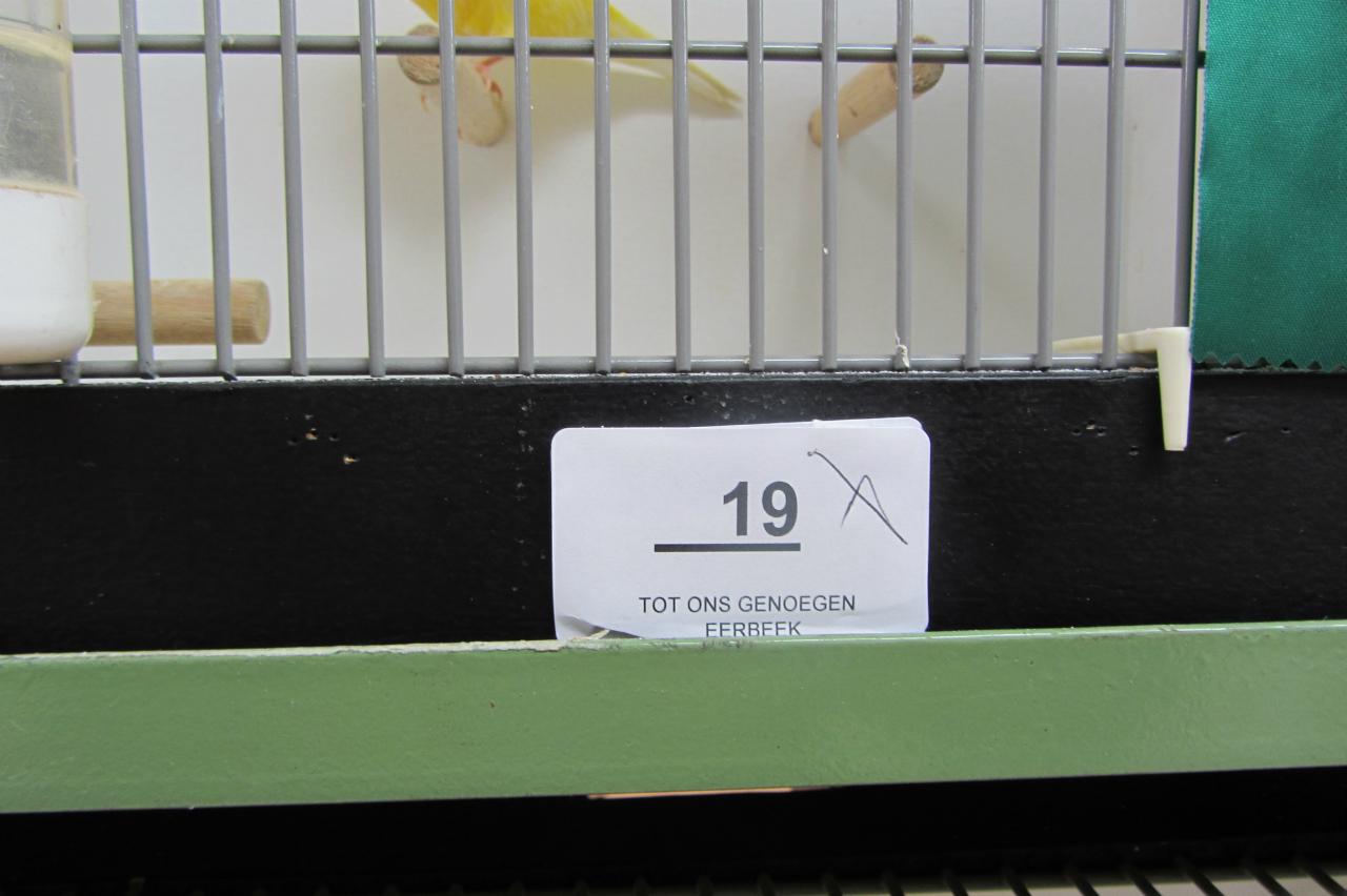fotos-vogelshow-2012-080