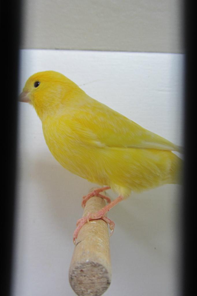 fotos-vogelshow-2012-081