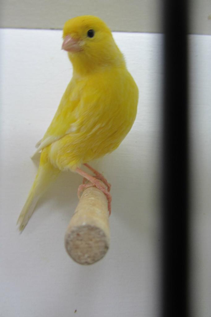 fotos-vogelshow-2012-082