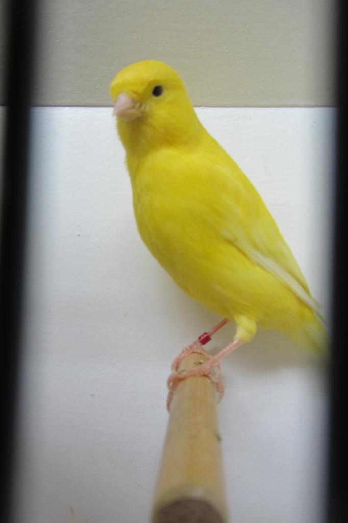 fotos-vogelshow-2012-086