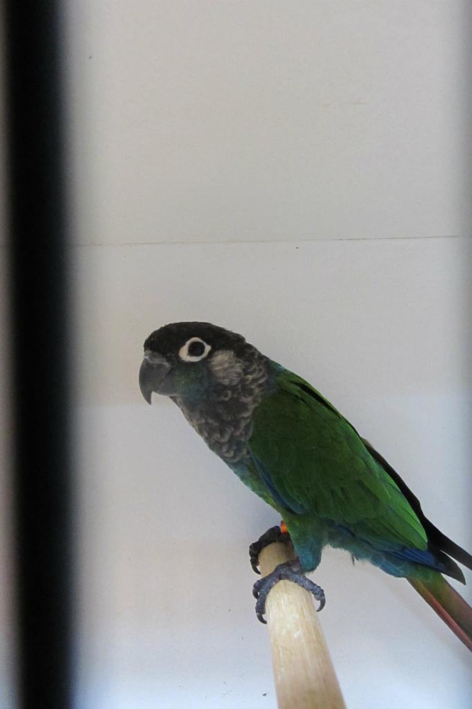 fotos-vogelshow-2012-090