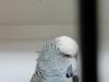 fotos-vogelshow-2012-074