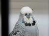 fotos-vogelshow-2012-076