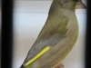 fotos-vogelshow-2012-078