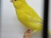 fotos-vogelshow-2012-085