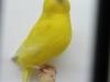 vogelshow-2012-010