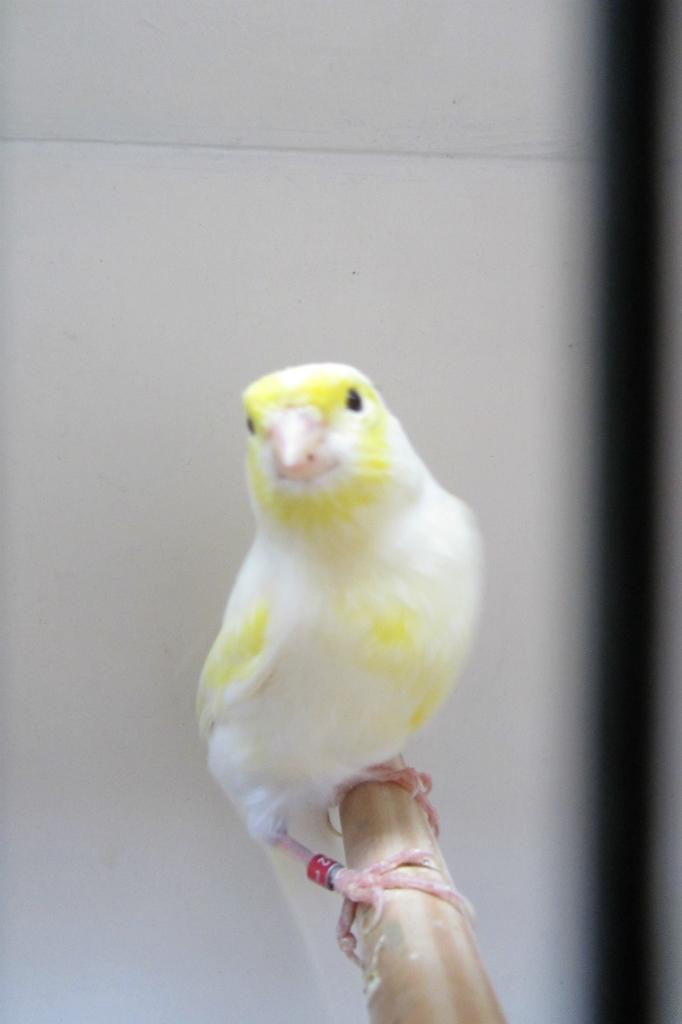 vogelshow-2012-005