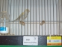 prijzen vogels nederlands kampioenschap